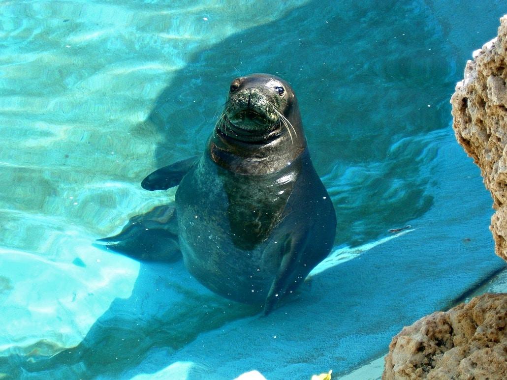 a sea lion sitting still in water