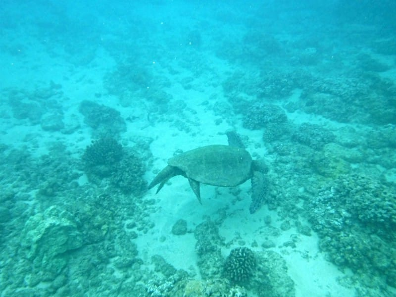 a sea turtle and coral at the bottom of the ocean