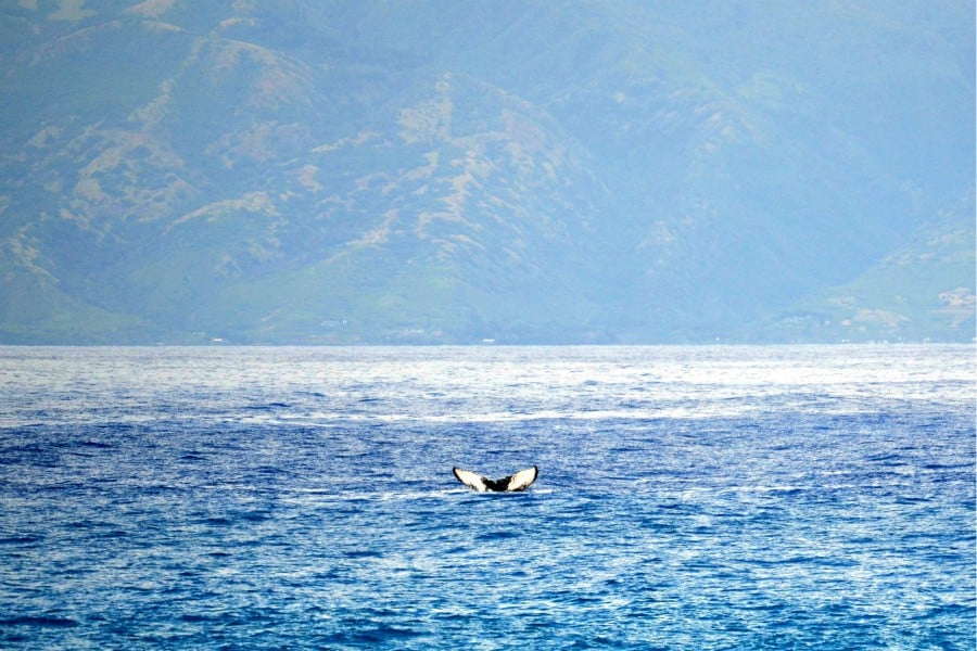 a whale fluke along the Kapalua Coastal Trail