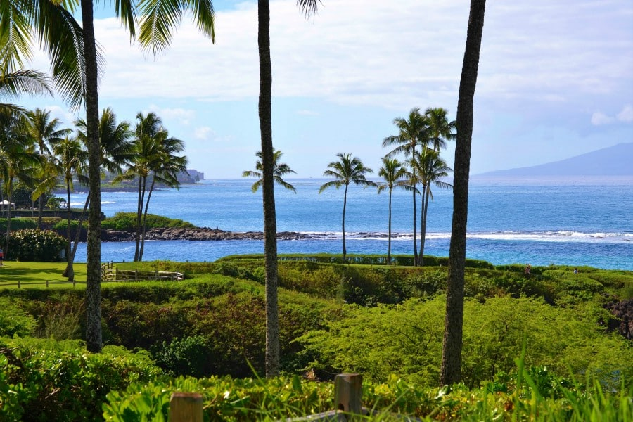 palm trees and ocean view along the Kapalua Coastal Trail