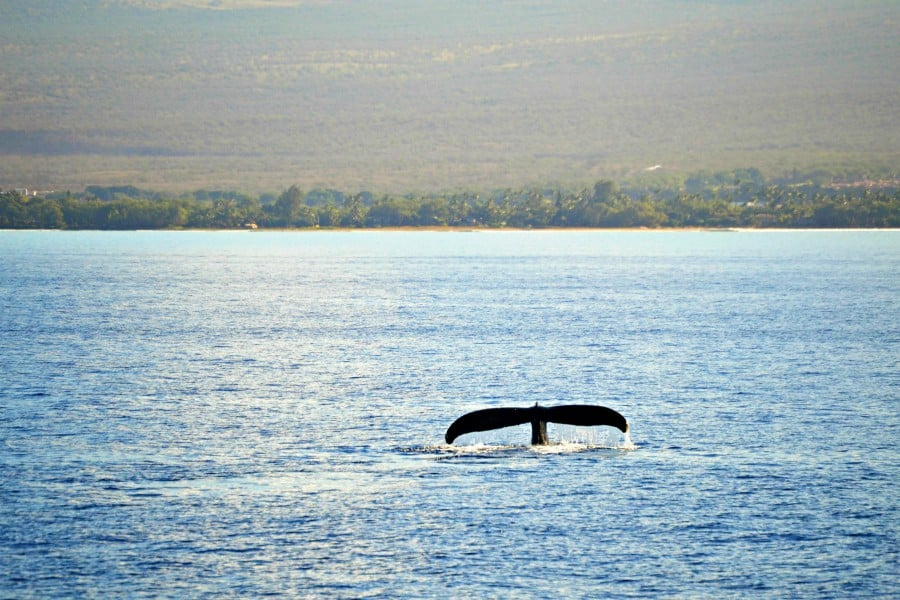 one whale fluke in the ocean
