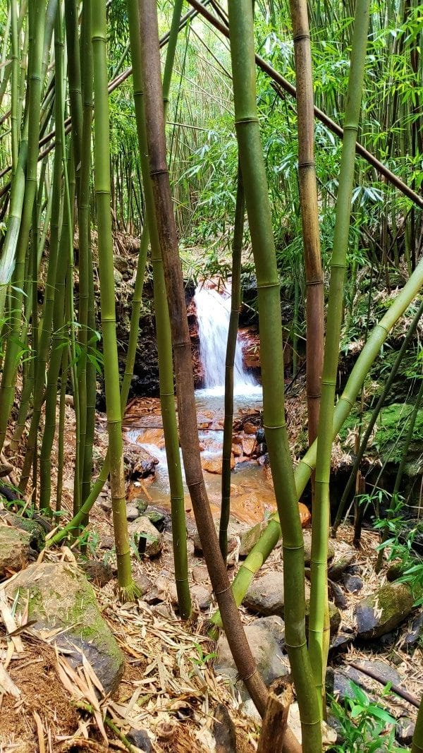 a waterfall in the bamboo forest