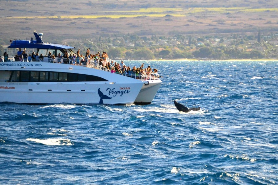 a whale fluke right next to a whale watching boat