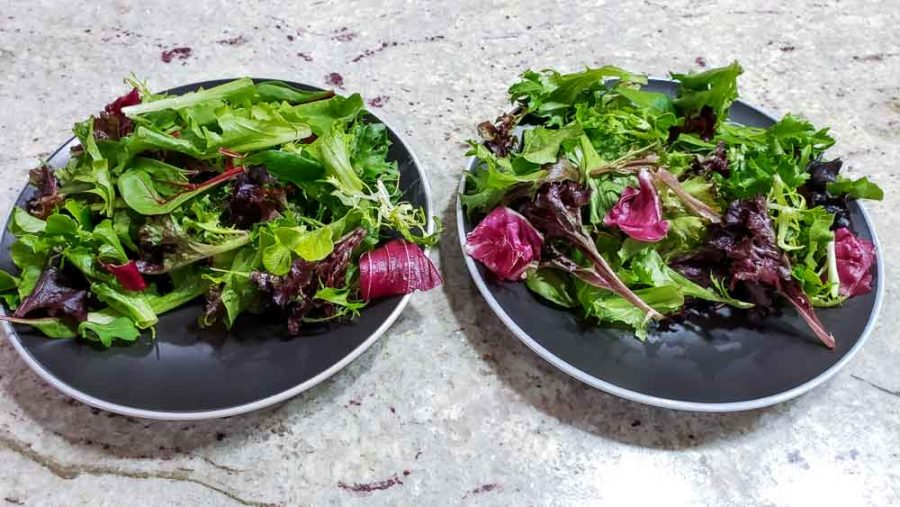 spring salad greens on two plates